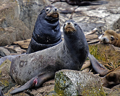 Ryans FLickr site on injured marine mammals