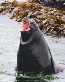 sea lion injuries