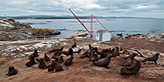 sea lions on north lawn