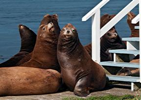 Sea lions near main house